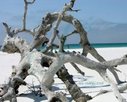 Katrina Driftwood Updated by Scooby777
