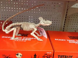 Boney Rat by JewelsStock