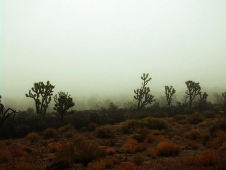 Joshua Tree Forest - Foggy day by nofile404