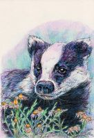 Badger by ohmindflowers