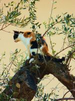 In her tree by MiDulceLocura