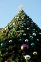 Tall Christmas Tree by terryrunion