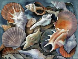 Box of shells I by karincharlotte