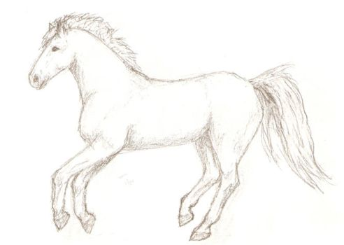 Another random horse done with pencil by elainelouve