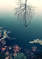 Fall Reflectionism by hoopaloo