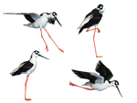 Wading Bird 04 PNG Stock by Jumpfer-Stock