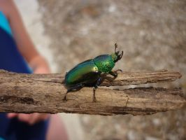 Green beetle 3 by shelldevil