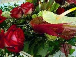 Red and White Flowers II by Maryl0u