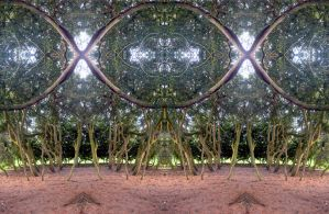 This Is A Century old Box Grove In Stereo by aegiandyad