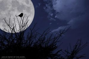 life in front of the moon by OmarAziz