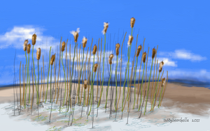 Cattail Dunes by teddybearcholla