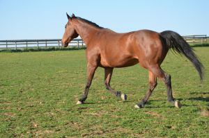 warmblood2 by Spotstock