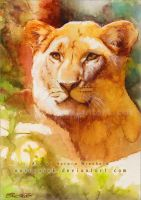 The lioness - watercolor study by AuroraWienhold