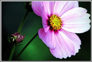 wait for turn to bloom by spattapurati