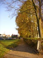 Autumn road by evetus