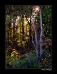 Enchanted Forest II by David-A-Wagner