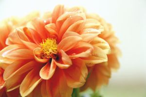 orange flower by benjic6