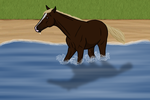 Choco Playing In Water by Desert-Rose-Ranch