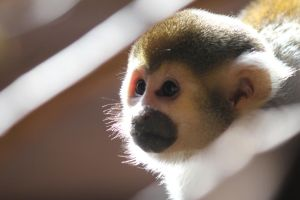 Monkey in Daylight by demboys18