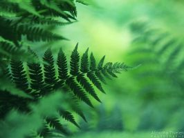 Green fern by AljoschaThielen