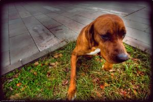 Old Puppy by PortraitOfaLife