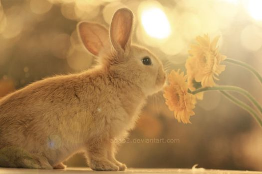 Bunny and little flowers ... by aoao2