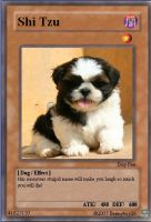 Shi tzu - dog yugioh card by Bennyboy26