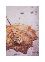 55/365 - Autumn is here. by Siera2