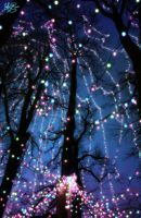 Tree Of Light by terral