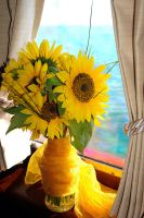 Brasilian sunflowers by Nickdan