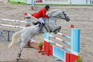 Show Jumping Championship '06 by bloody-rider