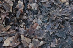 Muddy Leafs Texture Stock by wuestenbrand