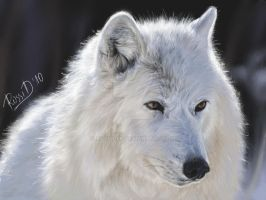 wolf by Rossid86