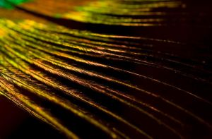 Golden Fibers by Jenni77