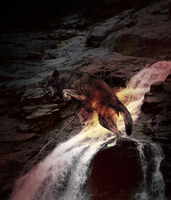 No Wings by Wiithout