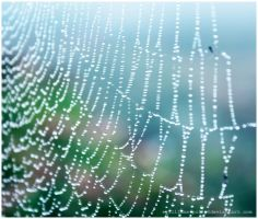 Spider's Web by evilllama-polly