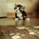 Guilty Kitten by cloduy