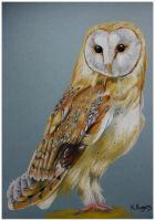 Barn Owl by Helenr251