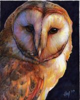 Barn Owl Thanks by Novawuff
