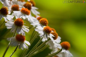 FLO 1 by LCPhotography