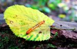 Caterpillar by AsmodelPictures