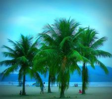 Coconuts by sweetlemmon