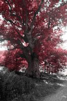 Red tree by Panoram