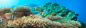 Underwater panorama by MotHaiBaPhoto