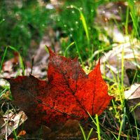 fallen leaf. by magnesina