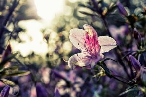 Spring Blooms II by JFroi