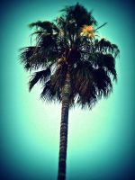 Palm Tree by audreyhepburnluv97