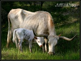 The Miracle Calf by octagonalstar