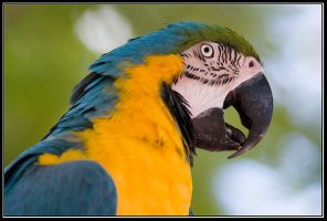 It's all About A Parrot by IgorLaptev
