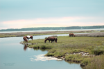 Assateague by Jaded-Night